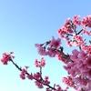 【春陽燻】〜晴れ間に臨むは雲海のゆらぎ〜