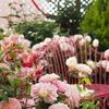 GWお出かけ:バラに囲まれた都内の空中庭園は素敵空間でした