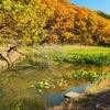 鏡ヶ池(茨城県桜川)