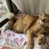 猫のビビアン~安全&快適対策~塔の上のラプンツェルになる!?