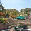 岡山市半田山植物園は色んな花が咲き誇っていました♬