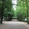 公園で黒いアゲハ蝶