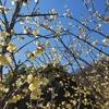 🌏#11 群馬県桐生市 梅田 〜梅田湖周辺で春を感じる~