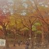 秋の京都旅行2017 1日目・その2