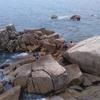 大自然も満喫✨牡蠣焼き新年会