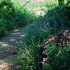 坂野ガーデン