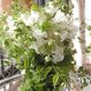 Wedding bouquet/ブライダルブーケ