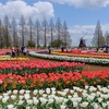 春恒例のお写ん歩! あけぼの山農業公園でチューリップを楽しむ!