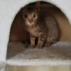 猫ブログ_2日目午後から少し慣れてきた #オシキャット