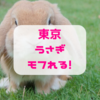 【モフれる】【東京】うさぎと触れ合えるうさぎカフェ10選