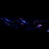 C4d Study Abstract Nebula