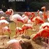 【神戸】神戸市立王子動物園のパンダ旦旦ちゃんに会ってきました〜中学生以下は入園無料です