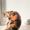 【愛猫日記】毎日アンヌさん#136
