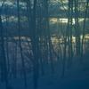 夜明けの木々 夕暮れの木々