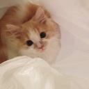 猫と暮らすシェアハウスの日常