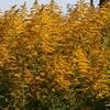 花粉も染みない、ナゲーのフーケー ホントは恐い雑草魂