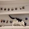 バンクーバーの猫カフェ