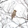 冬っぽい一日(大阪城野鳥探鳥 2018/12/09 6:15-12:05)
