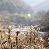 【砂金】荒川水系の砂金の旅