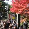 鎌倉の紅葉を見に行きました。