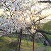 北海道の花見はこれから!知らないと損する【北海道の厳選お花見&観光スポット】