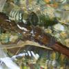 ヒキガエルが産卵しました!