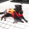 お隣の姉妹企業「氷屋ツルミセイヒョウ」のマスコット犬「りんちゃん」です!