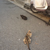 近所の野良猫が出産したせいで子猫だらけになってしまった件について