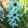 高坂園芸「珍しい花」