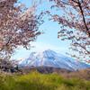 里山の明るい森: カタクリ