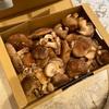 ちょいワル椎茸1キロ