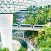 チャンギ空港のジュエルがヤバイ!キャノピーパーク、ショー、スーパーマーケットなど!シンガポール旅行記