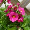 ある「春」の訪れ