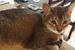 うちの猫が炊飯器を開けるのが好きで困るから炊飯器から土鍋に変更したお話