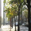 「UNIQLO TOKYO」がオープン 世界一を目指すユニクロ、国内アパレルは