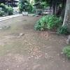 泉養寺 掃除。