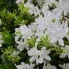 「佐久の季節便り」、「閏四月朔日)」、<月>の会は「三密」避けて…。