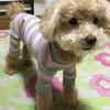 【シニア犬・老犬】愛犬へ簡単に歯みがきをする方法!