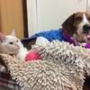 母猫の避妊手術。悲しい出来事。