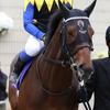 馬ファンタジスタのつぶやき 安田記念2019 内から岩田がすごーーーん!