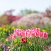 今年は静かに花が咲く:屋内施設は閉鎖の植物園