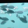 三浦海岸で海鮮モーニング、水中観光船「にじいろさかな号」、うらりマルシェ!