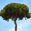 レスピーギ:交響詩「ローマの松」【3枚の名盤】絢爛豪華!ローマの街を音楽で駆け抜ける!!