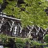 善峯寺で紫陽花や新緑を楽しんできた@2020