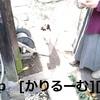 猫ハナ(はな)写真