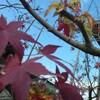 紅葉の若葉、12月に。