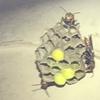 磐田市で換気扇のカバーの中にできたハチの巣を退治してきました