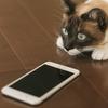 ワイモバイルとUQモバイルからiPhone SEが出たみたい、変えたい