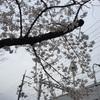 桜が満開の進級入園式の日でした。あと一年の息子に思う事‥