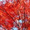 【写真】紅葉を観て、気分が高揚した話☆